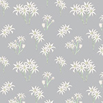 Sweet Bilby - Flannel Flower on Soft Grey