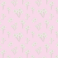 Sweet Bilby - Flannel Flower on Pink