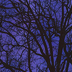 Raven Moon - Tree Silhouette in Gumdrop