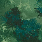 Enchanted Pines - Foliage in Pine