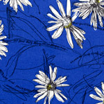 Mini Marguerite Daisies on Blue