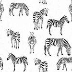 Black & Whites - Zebras in White