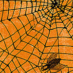 Wicked - Spider Web on Orange