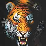 Animal Kingdom - Tiger in Wild (60cm Panel)